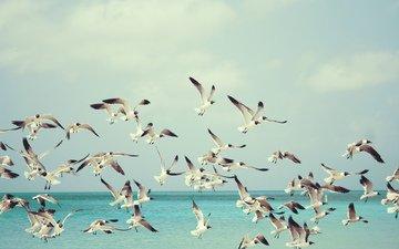 sea, flight, seagulls