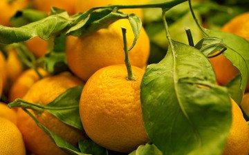 фрукты, мандарины, лакомство