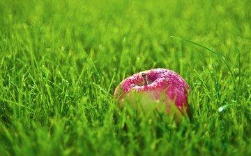 трава, роса, капли, яблоко