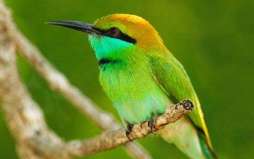 ветка, листья, макро, животные, птица, оперение, животно е