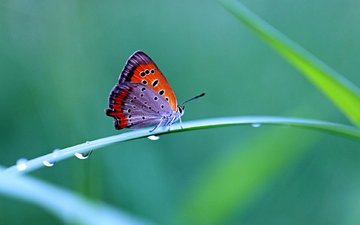 grass, drops, butterfly, contrast