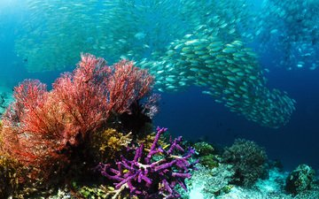 море, рыбы, кораллы, подводный мир, косяк