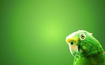 зелёный, фон, птица, попугай