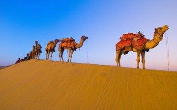 пустыня, караван, верблюды