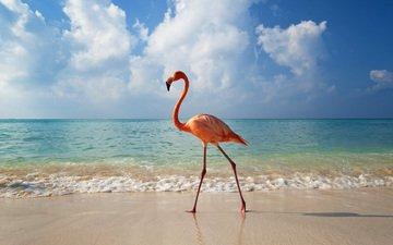природа, пейзаж, море, животные, фламинго, птицы, животно е