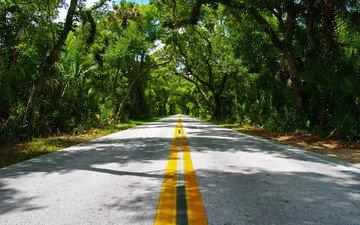 дорога, деревья, линии, разметка, асфальт