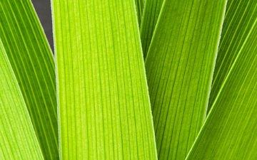 трава, зелень, макро, стебли