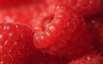 raspberry, berries