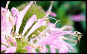 цветы, перья, перышки