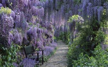 тропинка, глициния, райский сад, сиреневое чудо, скаменки