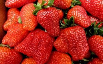 ягода, красная, клубника, спелая, сочная