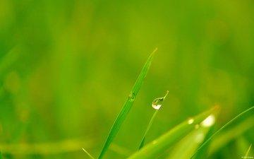 grass, rosa
