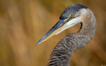 bird, heron