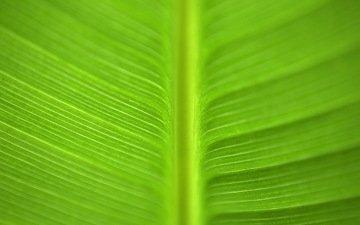 зелёный, макро, лист, зеленый лист