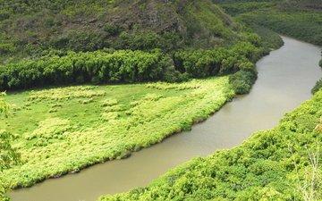 река, лес, пейзаж