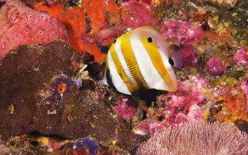 кораллы, рыба, подводный мир, красивая рыбка