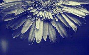 цветок, просто цветочек