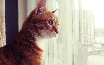кот, смотрит, сидит, окно, рыжий, рыжик, котик, скучаю