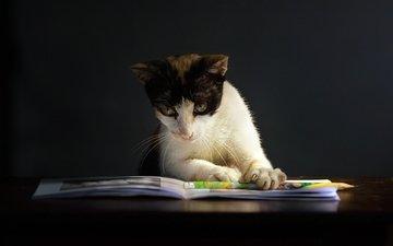 кошка, книга, киса, умная