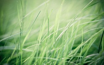 трава, макро, фон, зелёная трава