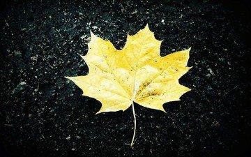 желтый, листья, фон, осень, черный, лист, асфальт, клен