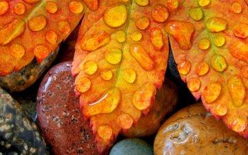 камни, листья, капли, осень, лист, клен