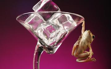 frog, glass, ice cubes