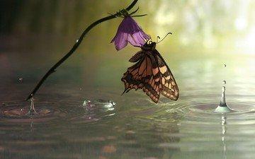 макро, цветок, капли, бабочка, дождь, лужа