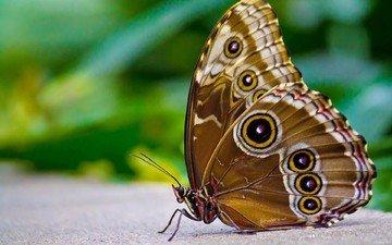 бабочка, крылышки