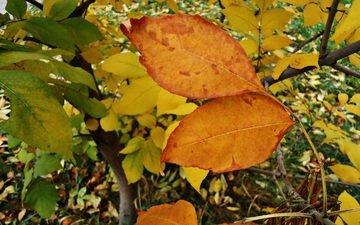 листья, крупный план