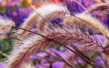трава, красивая, пушистая