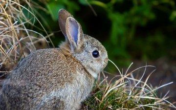 трава, заяц, зайчик, зайчонок