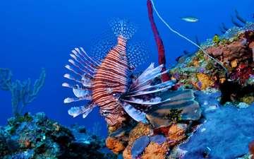 кораллы, рыба, риф, подводный мир, крылатка, рыба-лев