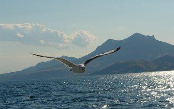 полет, чайка, птица