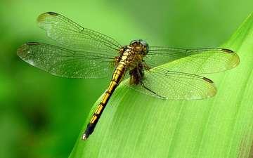 зелёный, фон, насекомые, стрекоза