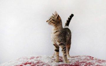 котенок, перья, пух, киса