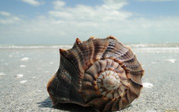 sand, shell