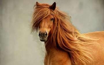 лошадь, конь, жеребец
