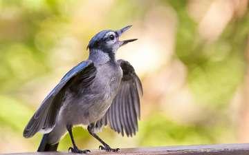 птенец, птица