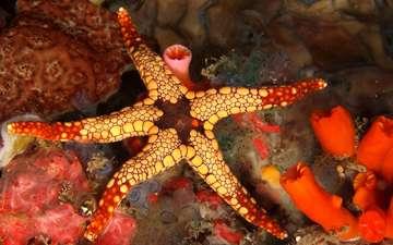 морская звезда, риф, подводный мир