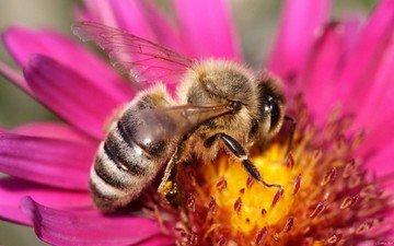 цветок, бутон, пчела, нектар
