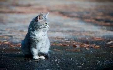 листья, фон, кошка, котенок, улица, асфальт