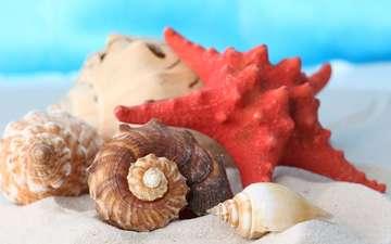 макро, песок, пляж, ракушки, морская звезда, раковины