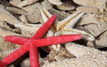 макро, морская звезда, star fish, морские звезды