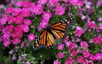 цветы, макро, цветок, бабочка, насекомые