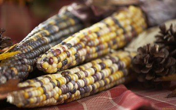 кукуруза, овощи, зерно, злаки, крупным планом, пятнистые кукурузные початки, початок