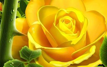 цветок, роза, лепестки, бутон, жёлтая, крупным планом