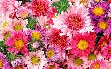 цветы, ярко, букет, много, красиво