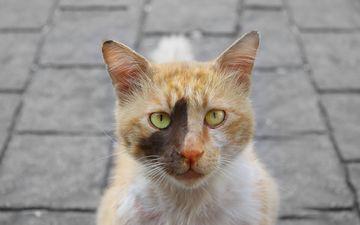 глаза, морда, кот, кошка, взгляд