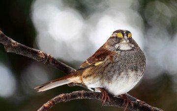 ветка, блики, птица, птичка
